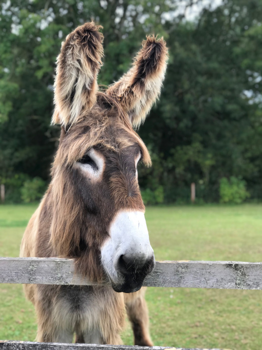Motorhoming, Caravanning and Camping in South Devon - Here We Tow Sidmouth Donkey Sanctuary