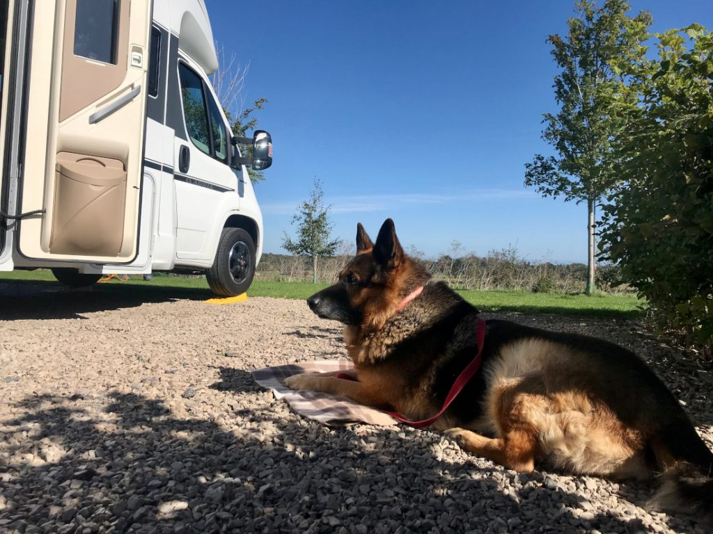 Motorhoming with Dogs: 5 Top Tips - Fudge chilling